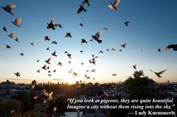 09-04 Pigeons
