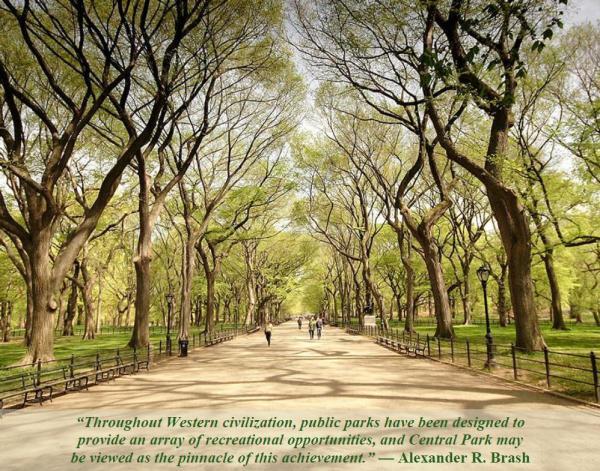 05-20 Central Park Elms