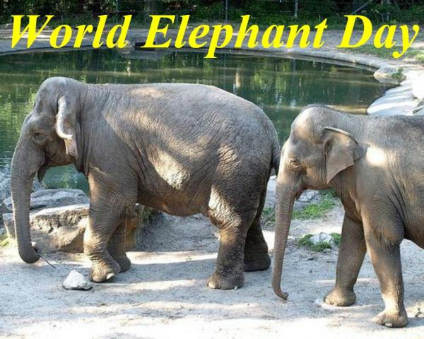 08-12 World Elephant Day